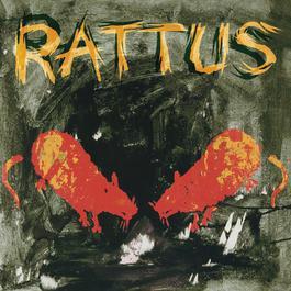 Rattus 2008 Rattus