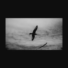 ฟังเพลงอัลบั้ม Wings